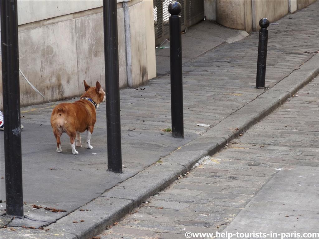 Urlaub mit Hund Paris