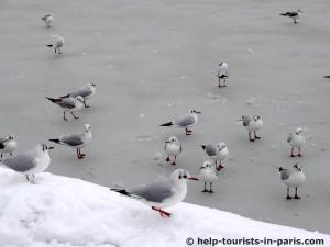 Teich Paris Schnee