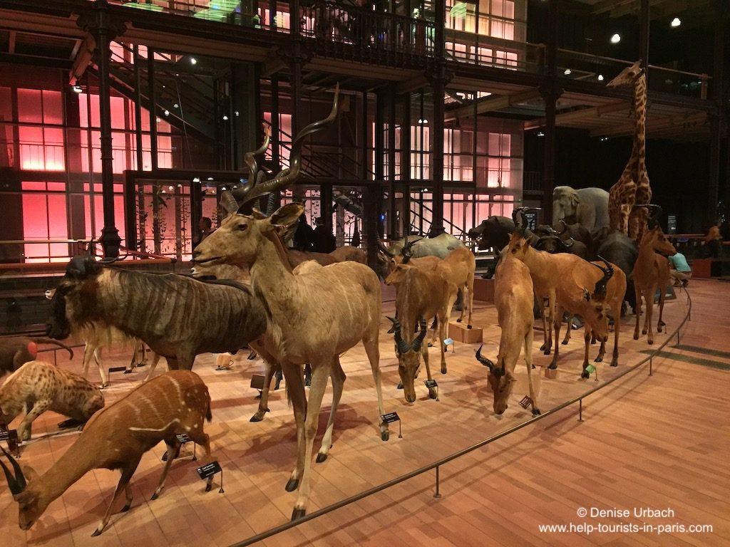 Paris Naturkundemuseum Evolutionsgalerie