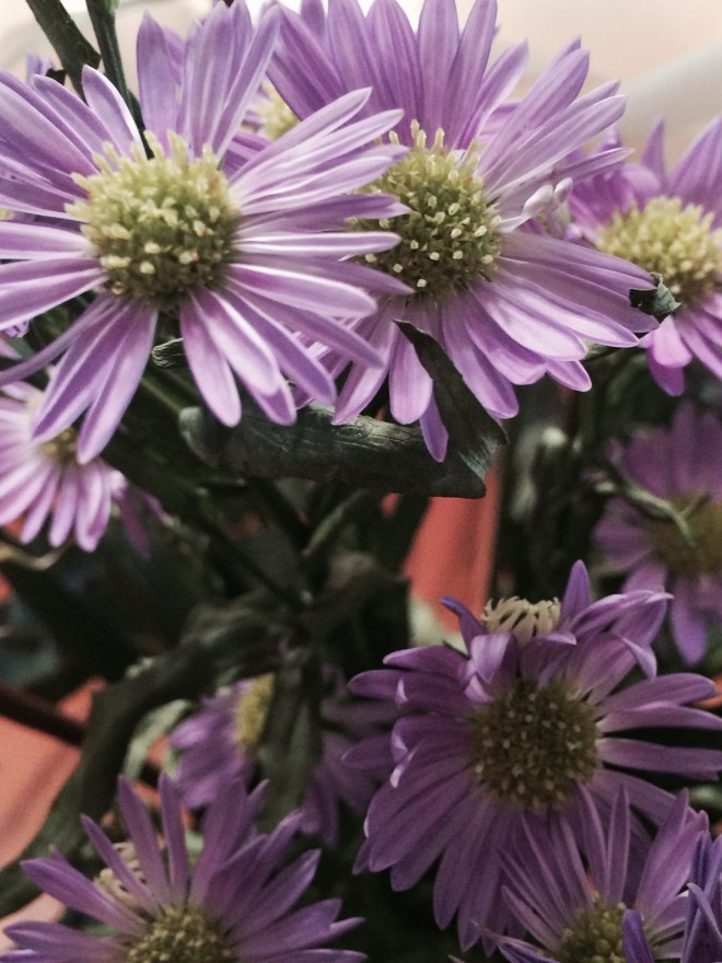 The latest on my dining room table.