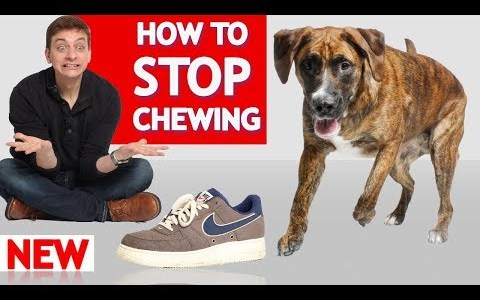 How To Stop Your Dog From Chewing!