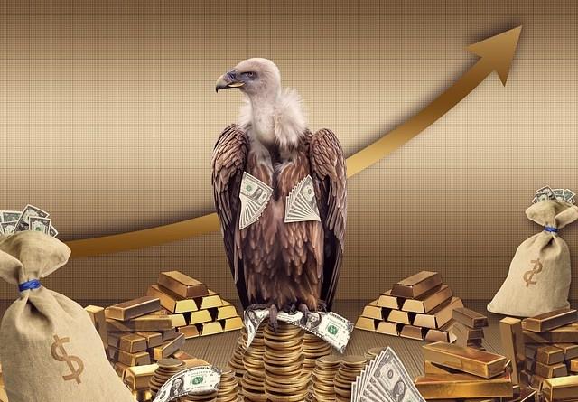 vulture-