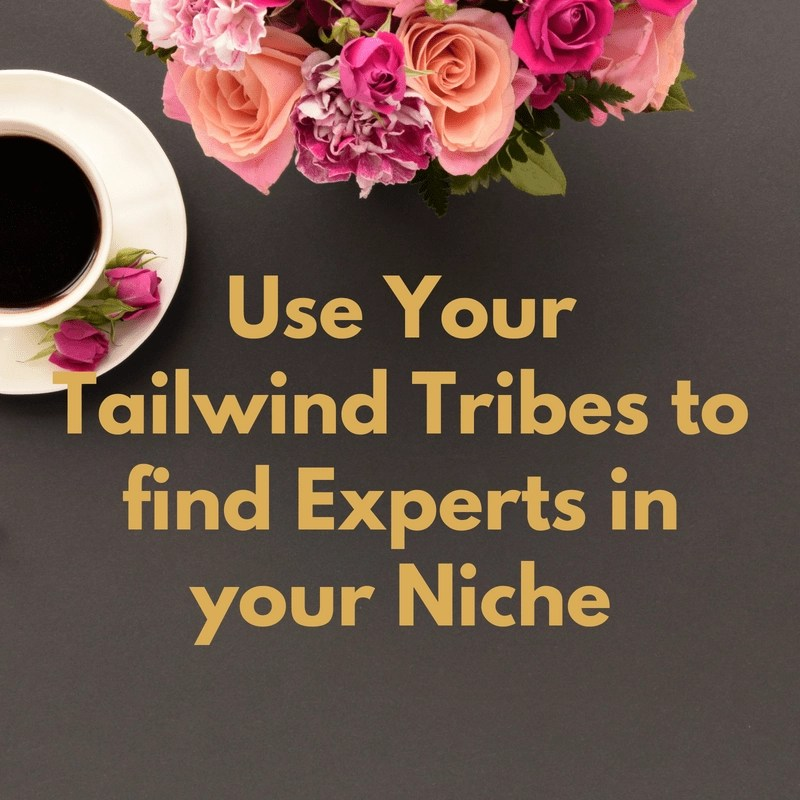 I've found a great new Pinterest trick to use my Tailwind Tribe insights data to find the expert pinners in my niche and go Follow them.
