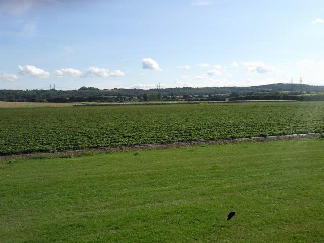 A flat Kentish field
