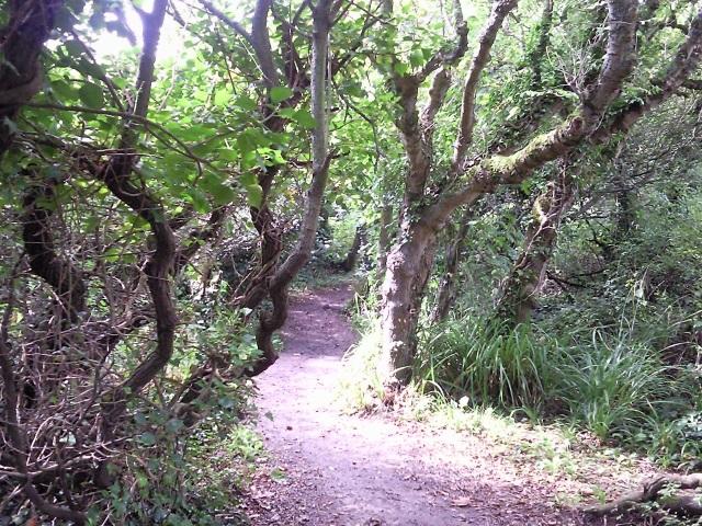 A path through woodland