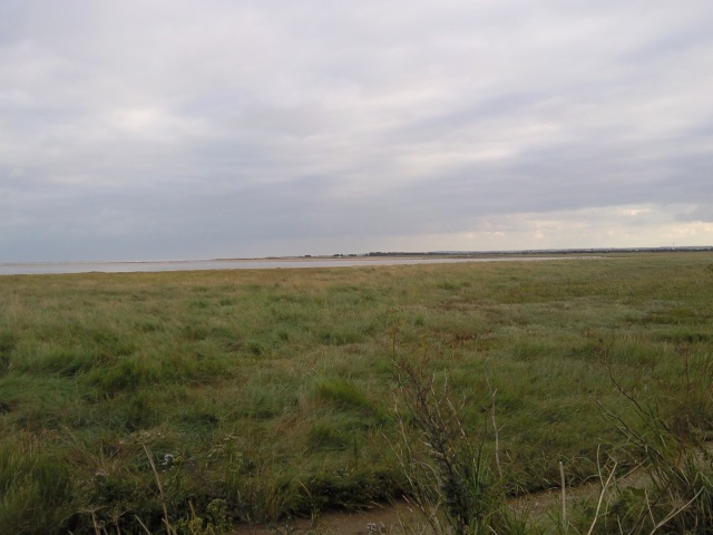 A tract of salt marsh in Pegwell Country Park