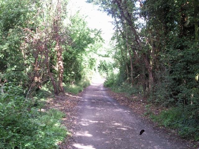 A leafy lane