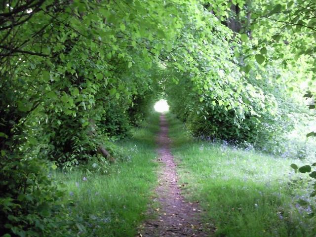 A surprisingly tubular leafy tunnel