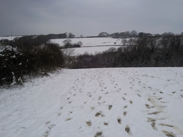 View down a snowy hill. Several sets of footprints lead downhill.