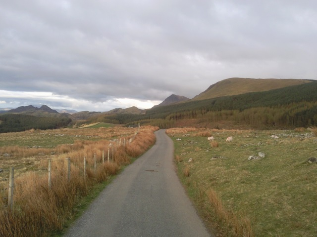 A forest ahead and, beyond it, Cadair Idris