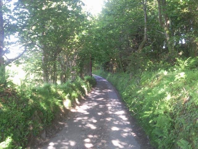 Leafy, sun-dappled lane