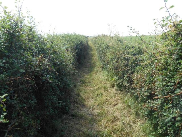 Path towards Penrhyn-hwlad