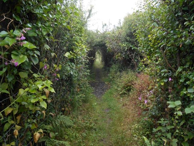 Path through Malltraeth