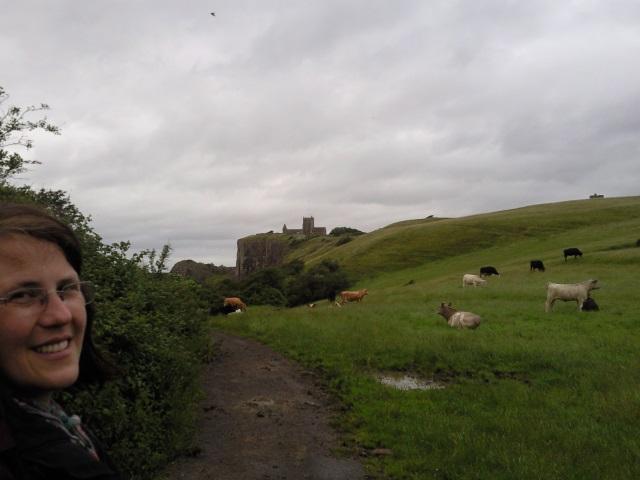 Old Church of St Nicholas beyond a field of bullocks.