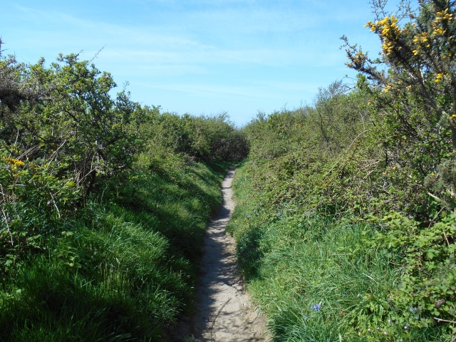 Path flanked by gorse