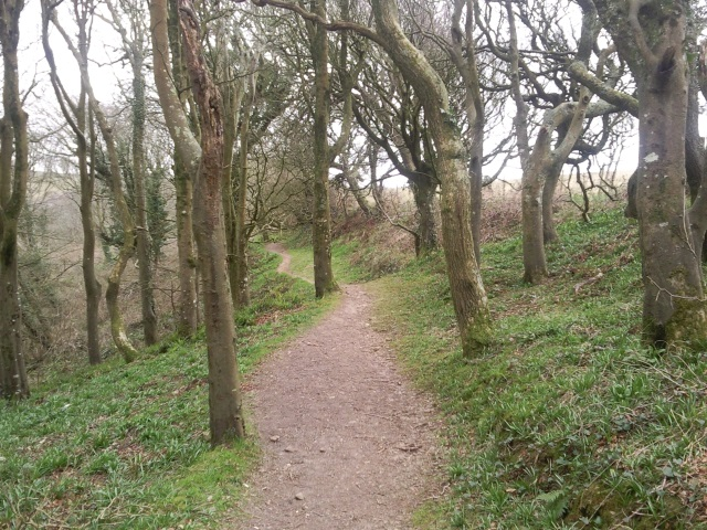 Wooded path off Borough Head