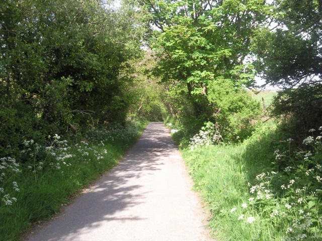 Leafy road from Aber Mawr