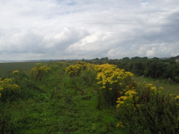 Flowers on the dyke
