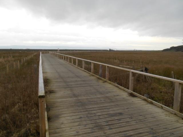 Dee Marshes boardwalk
