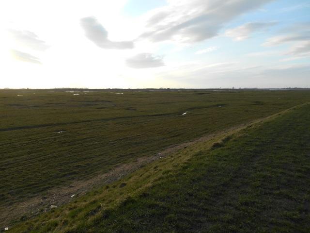 Hutton Marsh