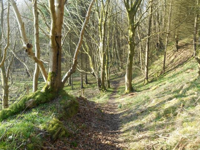 Senwick Wood