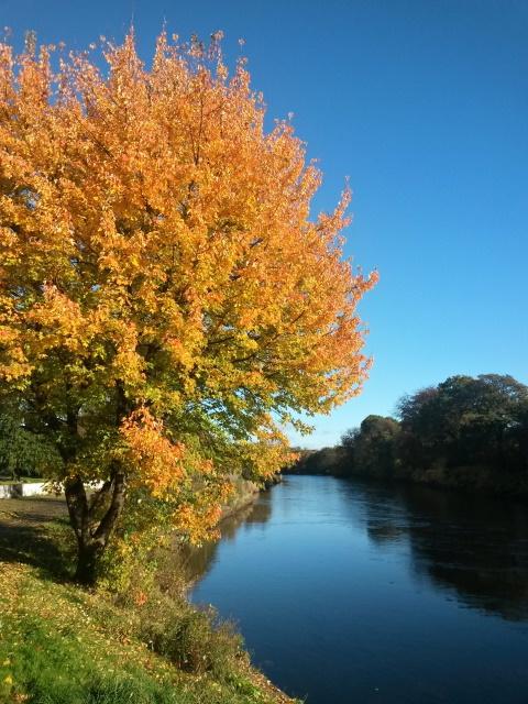 An autumnal tree