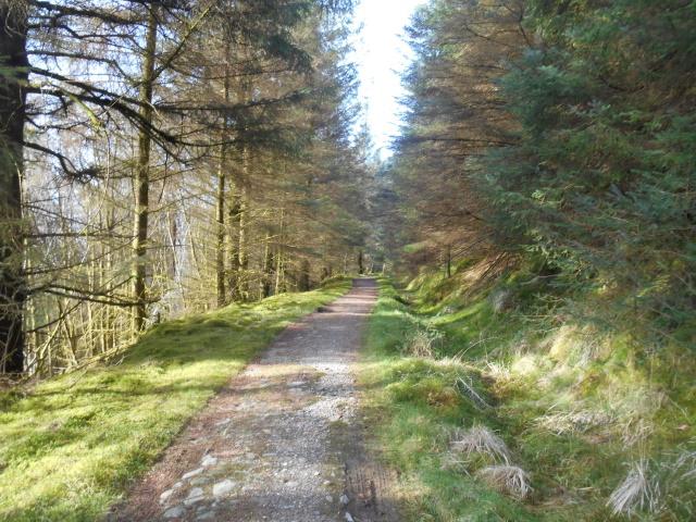 Conifer-lined path on Ben Arthur