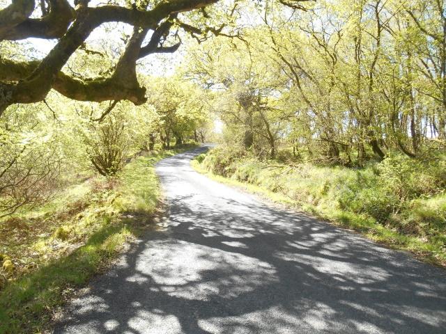 sun-dappled road