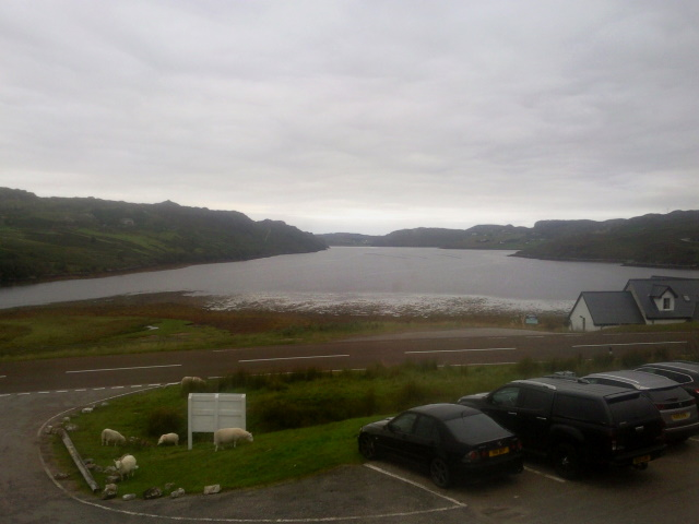 Loch Inchard and 5 sheep
