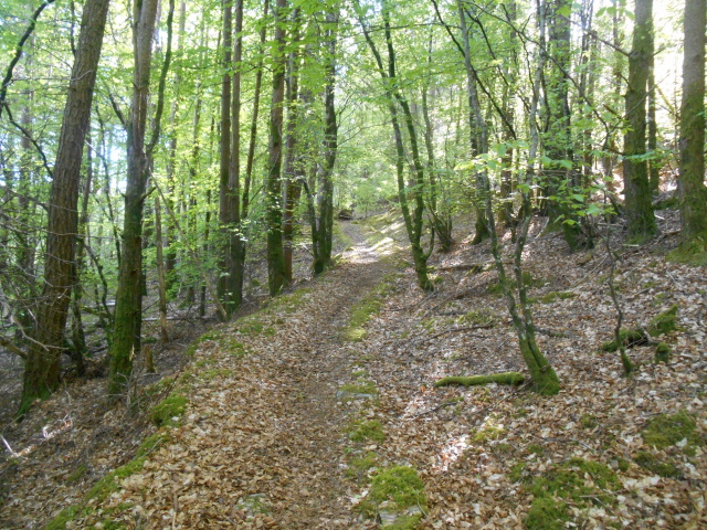 Path from Balmacara