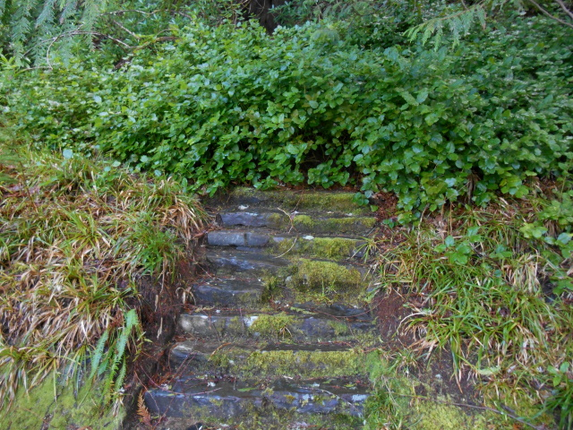 Steps into the undergrowth