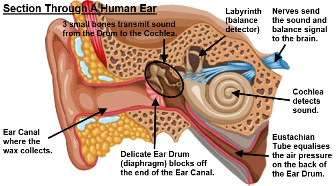 What Is Earwax All About?