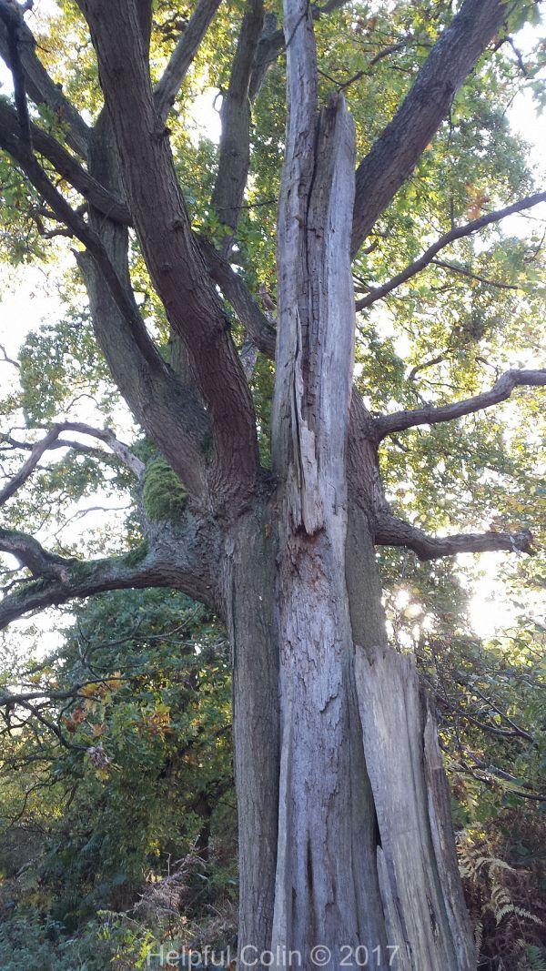 trees parasites