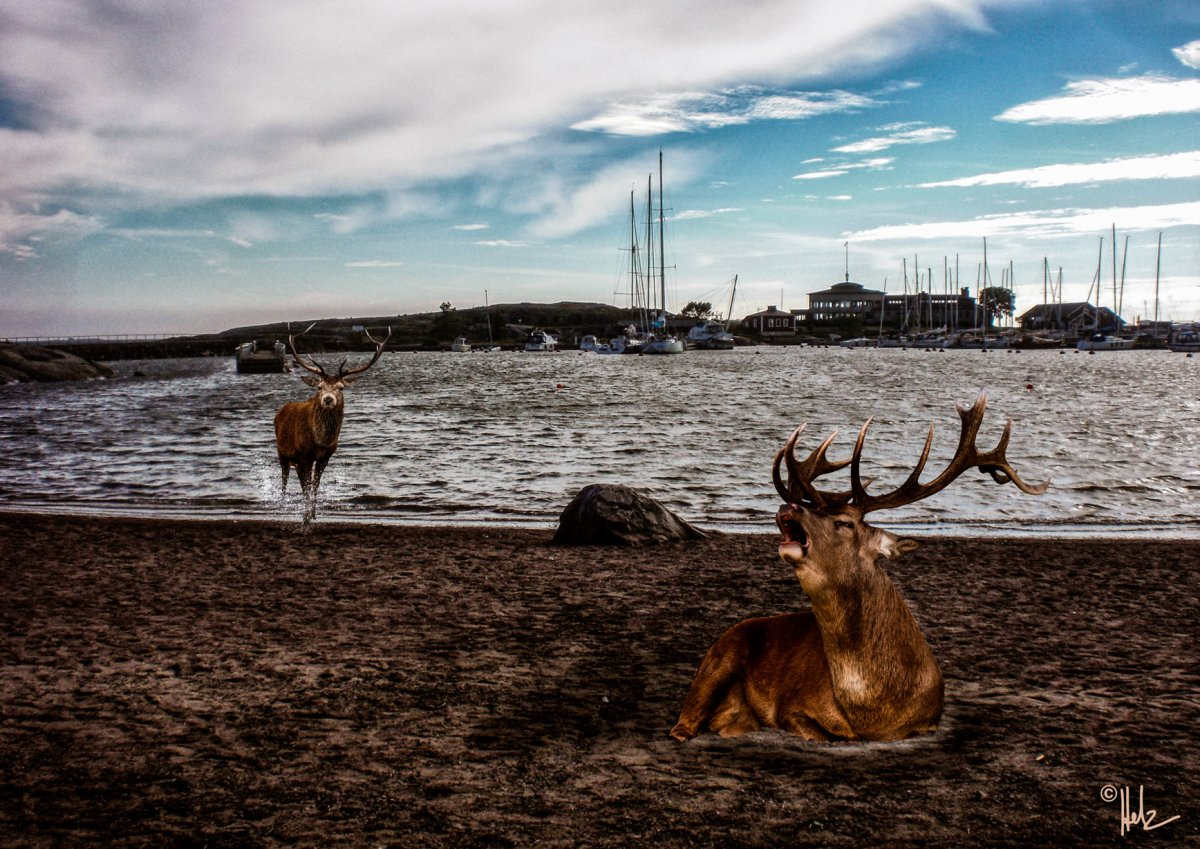 Helsinki Secrets revealed: Deer at Uunisaari