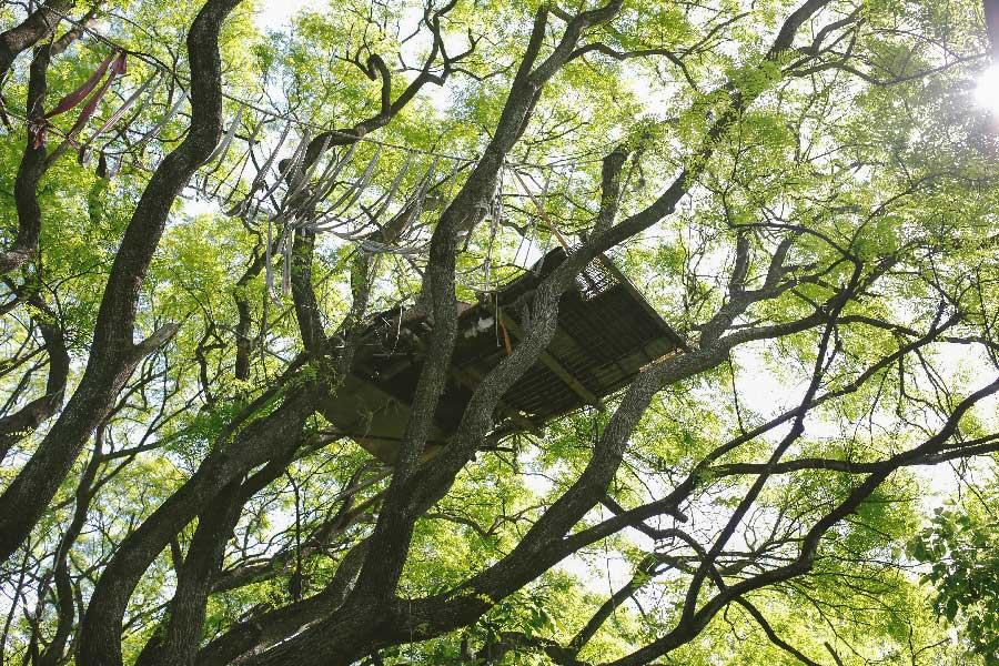 Tree House from the series Turning Light by Jenni Emilia Toivonen