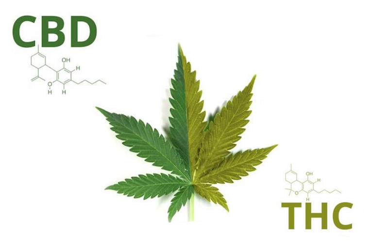 CBD AND THC: The Difference Explained