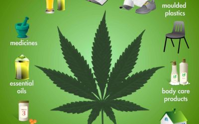 Hemp, Cannabis and Marijuana: What's the Difference?
