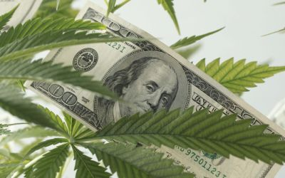 Hemp Industry Is Cleared to Do Business With Banks