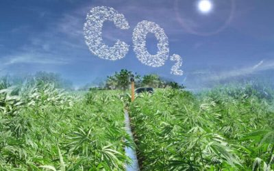 How Hemp Can Reduce Carbon Dioxide in the Air