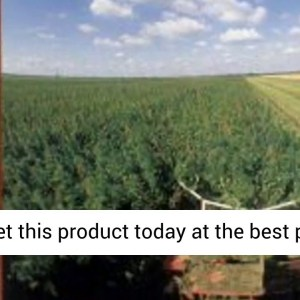 Hemp Horizons: The Comeback of the World's Most Promising Plant - REVIEW