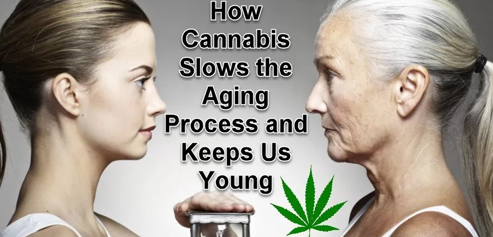 How Cannabis Slows The Aging Process and Keeps Us Young