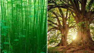 Industrial hemp fiber is better than wood in every way