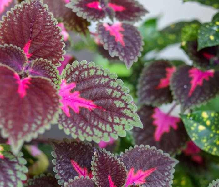 Palettblad skötsel – Så sköter du om ditt fina palettblad