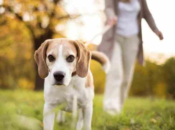 Raw Dog Food Feeding Guide