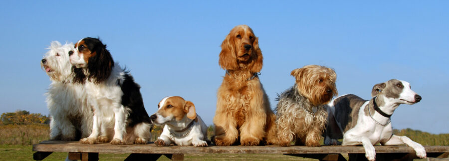 Dogs sitting on picnic table