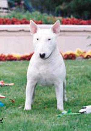 2835中國の三面記事を読む(1117) 北京で 大型犬の飼育禁止令 ...