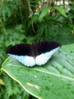Perhospuisto oli pullollaan mitä kauniimpia perhosia