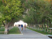 Walkway of trees