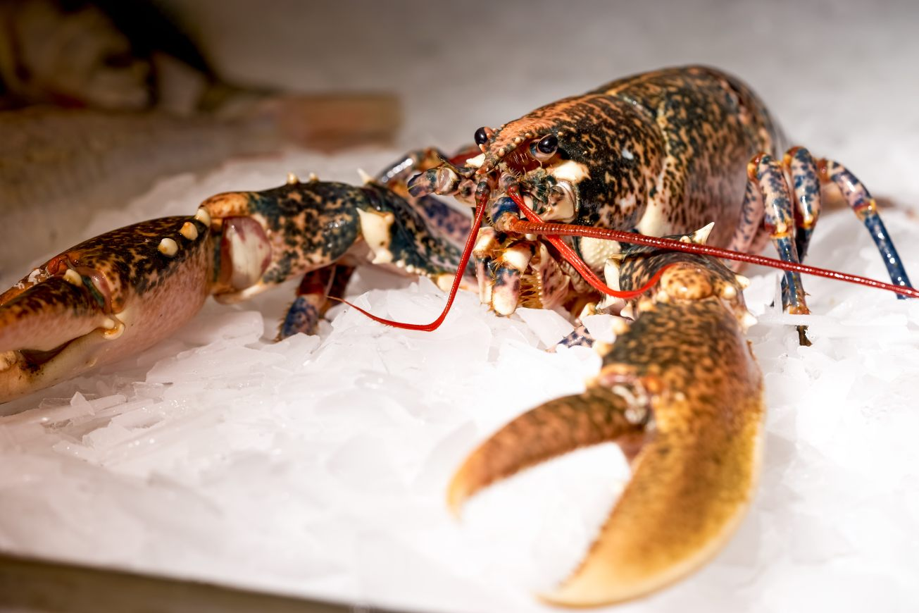 Fresh lobster at the fish monger - seafood photography