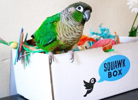 squawkbox